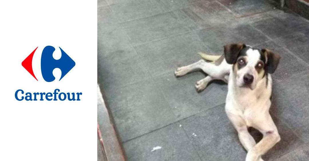 Após Protestos Contra Morte De Cachorro Carrefour Osasco